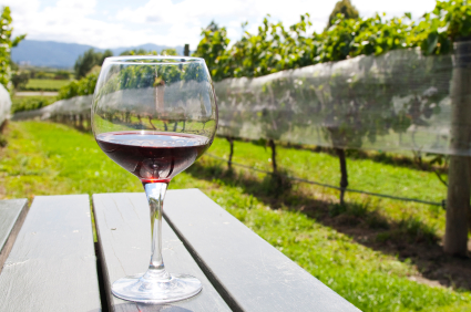 Glass with red wine in vineyard