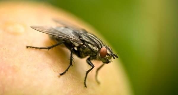 11-simple-and-effective-ways-to-keep-flies-away-from-your-home